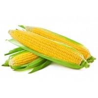بذور الذرة