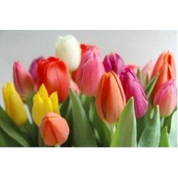 تعلم زراعة الورد في منزلك واجعله ينبض بالحياة