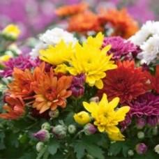 بذور الزهور