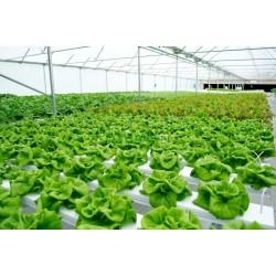الزراعة المائية و مميزاتها و الأدوات اللازمة