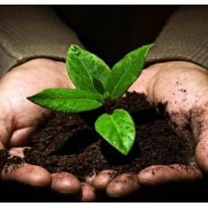 بوتينج سويل تربة زراعية 1لتر Potting Soil