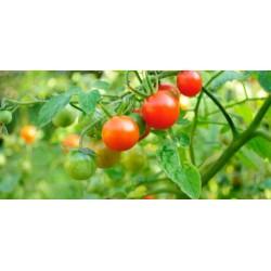 مواعيد زراعة بذور الخضروات