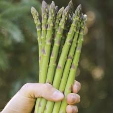 بذور الهليون Asparagus