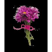 بذور الزهور (67)